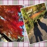 『MOSAIC組の京都修学旅行』の画像