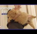 重さ16キロの太っちょ猫「キング」に新しい飼い主が見つかる