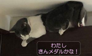"""難易度の高い""""場所""""に登る猫"""