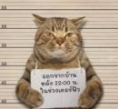 【自粛命令に従わない奴はこうだ】外出禁止命令に違反したネコ、タイ警察が逮捕・拘束