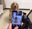 【動画】写真を撮ろうとすると笑顔になる中国のイヌが話題に