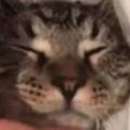 ネコが私にくっついて寝ていた。可愛いなぁ。アゴの下を指で撫でてみる → ファッ!?…