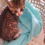猫の里親募集 保護猫とうがの里親探し