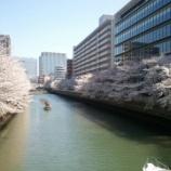 『門前仲町の桜が待ち遠しい』の画像