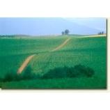 『道』の画像