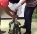 【閲覧注意】中国のヘビ酒造りの様子が残酷すぎると批判殺到!