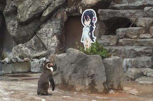 【けもフレ】ペンギンのおじいちゃん、フルルーにガチ恋してしまう(画像あり)のサムネイル画像