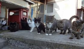 【動物】   日本には 猫だらけの 猫島がある!? 田代島の猫達の画像。   海外の反応