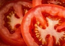 オヤツにトマトに砂糖かけたの渡したらキモがられたんやが
