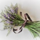 『丈夫なラベンダー【ラバディン'グロッソ'】簡単挿し木で復活』の画像