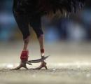 鶏にナイフで股間を刺され飼い主の男性が死亡 インド