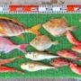 アジの泳がせ釣りでヒラメ2匹!前アタリは最長5分待ち!