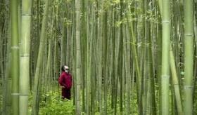 【日本旅行】     外人3人組が、日本を自転車で旅をする動画   海外の反応