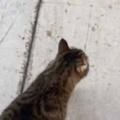 【ネコ】 道を歩いていたら1匹の猫が現れた。目の前を歩きだす → こうなった…