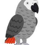 【動物園】「うせろ」「太ったクソ野郎!」一羽が使うと連鎖する罵詈雑言、5羽のヨウムが公開中止にwwwwwwww(英)