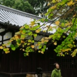 『下鴨神社』の画像