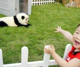 中国で「カラー犬」がブーム。パンダ柄に染めたチャウチャウやトラ柄のゴールデンリトリバーなど