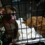 NPO法人・犬猫みなしご救援隊・代表ブログ・みなしご庵へようこそ