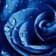 【悲報】青色、自然界に存在しなかった