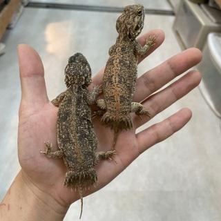 爬虫類倶楽部大宮店公式ブログ