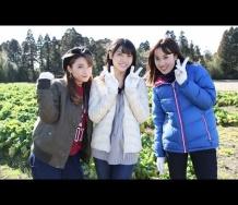 『【動画】矢島舞美・岡田万里奈・二瓶有加の菜の花収穫!』の画像