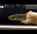 水族館に展示されることなく下積み20年以上。腸のような生き物が一世一代の大勝負へ。名古屋港水族館