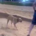 イヌを海に連れてきた。いろんな人に、これ投げて♪ → 犬はこうします…