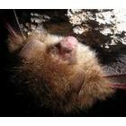 『岩場に眠る』の画像