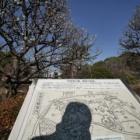 『続・哲学堂公園の梅 2020/02/11』の画像