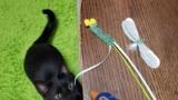 猫の壊したおもちゃ直してる(※画像あり)