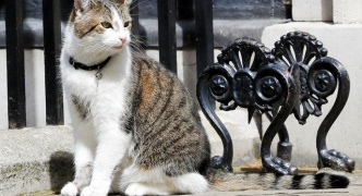 英キャメロン前首相、猫とお別れ… 官邸ネズミ駆除係