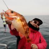 『1月23日 釣果 スーパーライトジギング SLJ 湖の様な海でした☀』の画像