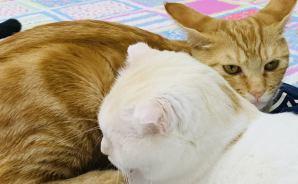 魚の形をしたベッドに集まる猫たち