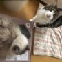コストコで新しい枕を買ってみたら・・・