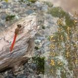 『フォト短歌「赤とんぼ」』の画像