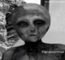 UFO墜落、エイリアンを生け捕り…米ニューメキシコ(画像あり)★2