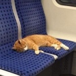 猫が電車の座席で昼寝してるけど、このままじゃ迷子になっちゃう ⇒ SNSで呼びかけたら飼い主が見つかった!