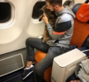 体重10キロの「太っちょ猫ちゃん」機内持ち込みの男性、替え玉作戦成功もマイル剥奪