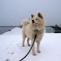 【画像】秋田犬かわいいwwwwwwwwwww