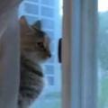 ネコが窓辺で外を見ていた。庭に何かいるようだ → すると…