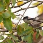 シニアの鳥撮り・素人日記