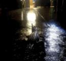 オーストラリア豪雨、ダム緊急放水で町水没停電する中、ワニが徘徊し数日中には竜巻も・・・・