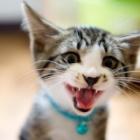 『飼い猫でも危険!!猫に噛まれた時の対処方法と危ない病気』の画像