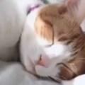 ネコが静かに眠っていた。自動餌やり器が動いてカリカリが出てくる → いつも猫はこうなる…