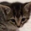 子猫がベッドの上にいた。怖くて降りられない。なんとかしろぉっ! → 子猫、ぴえ~んです…