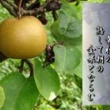 『朝の果物は金』の画像