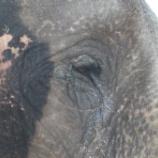 『ゾウのサーカスからの解放』の画像