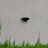 『羽を広げて止まるのは蛾??』の画像