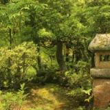 『桜の木の神様』『この中見るな』『狛犬に草履』他 寺社にまつわるオカルト