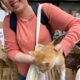 『子猫ちゃん幸せになってね!』の画像